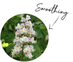 Horse Chestnut Flower