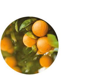 Sweet Orange Fruit Extract