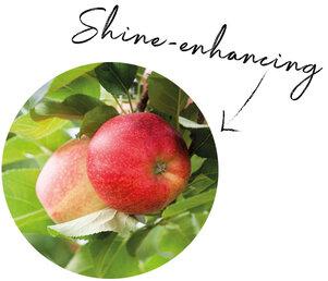 Apple Fruit Extract