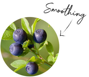 Bilberry Seed Oil