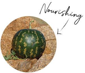 Kalahari Melon Oil