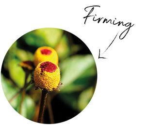 Paracress Flower Extract