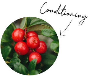Lingonberry Seed Oil